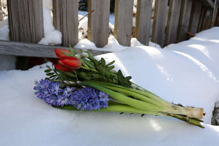 A bouquet of spring flowers lies in the snow Reklamní fotografie