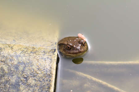 The toad came to the spawning pond.