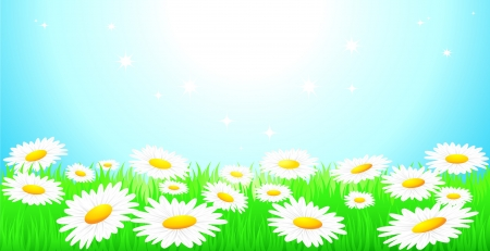 farm land: natural background with blue sky, camomiles field and green grass Illustration