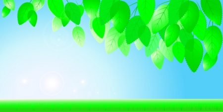 ecology background: background with blue sky, sun, branch with leaves and grass