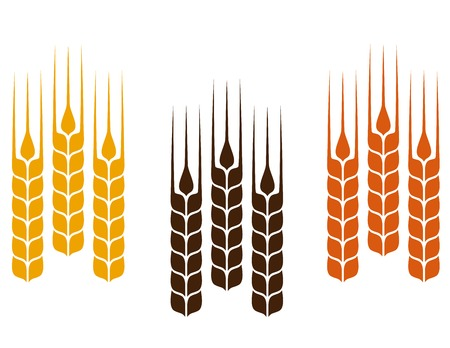 set of simple colorful wheat ears Vector