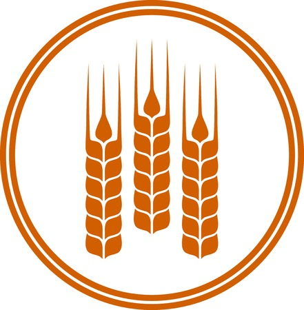 espiga de trigo: icono redondo con los oídos del trigo en el fondo blanco