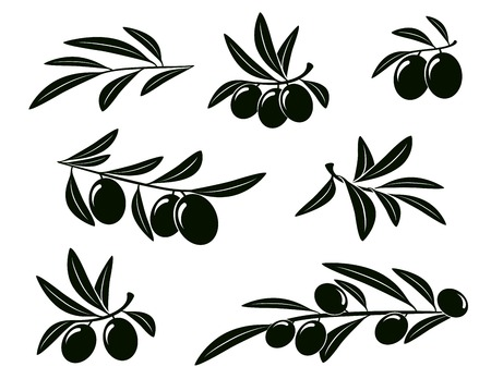 set of isolated olive branches on white background Vector