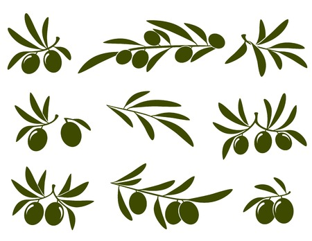 olive branch set on white background