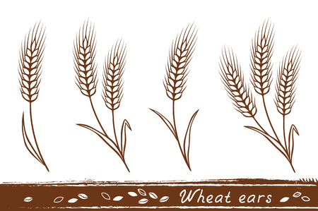 Isolated wheat ears set with grain icons Illustration