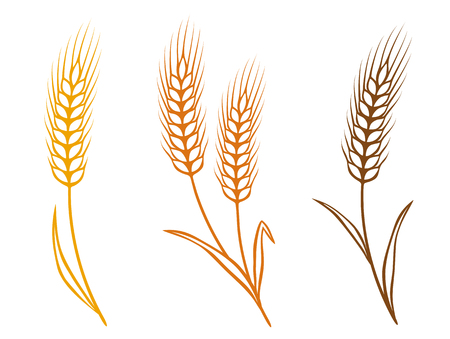 colorful isolated wheat ears icons with grain Illustration