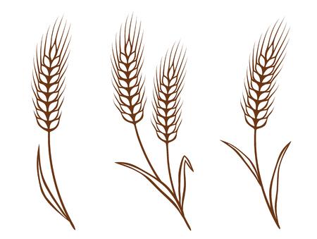 caryopsis: isolated wheat ears set