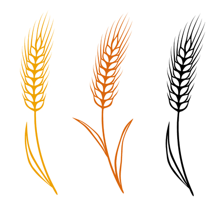 colorful isolated wheat ears set