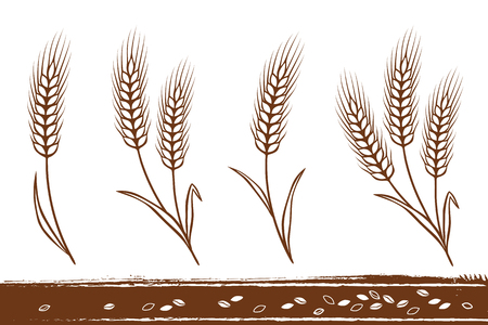 Isolated wheat ears Illustration