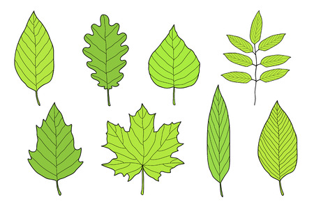hand drawn set of green leaves Illustration