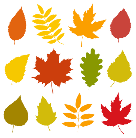 A set of isolated colorful autumn leaves.