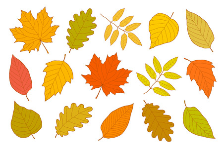 Hand drawn set of isolated autumn leaves
