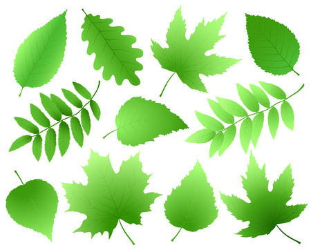 set of green leaves and branches