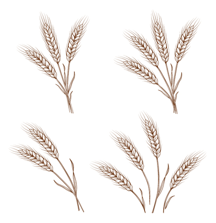 hand drawn wheat ears and sheaves
