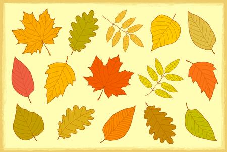 set of hand drawn isolated autumn leaves Illusztráció