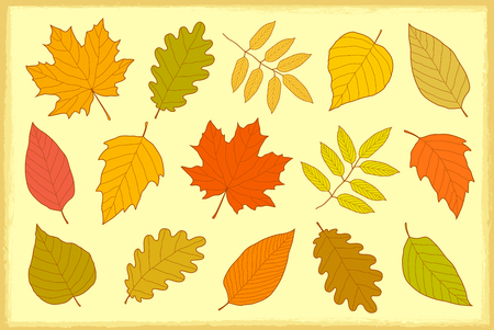 set of hand drawn isolated autumn leaves Illustration