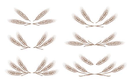 wheat ears design elements set