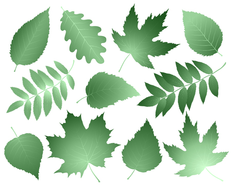 Vintage collection of leaves and branches
