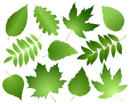 conjunto de folhas e ramos verdes Ilustración de vector