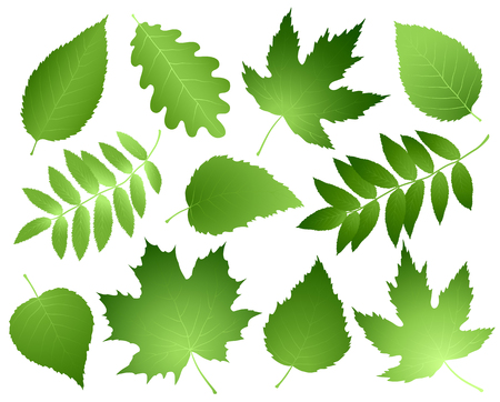 green leaves and branches set Illustration