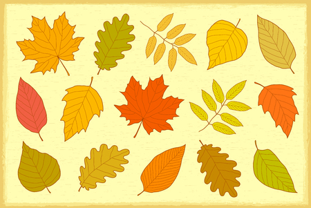 artistic set of decorative hand drawn colorful autumn leaves