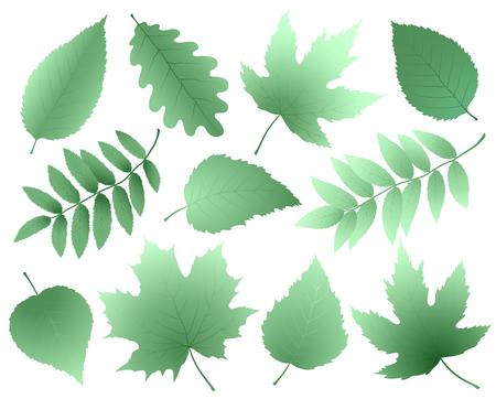 Conjunto de siluetas de hojas y ramas