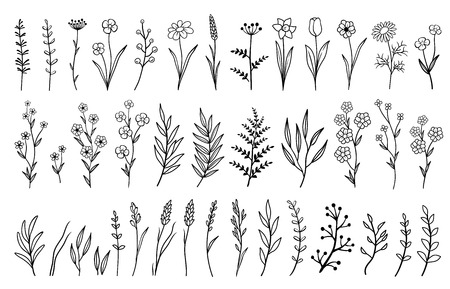 hand drawn isolated flowers and herbs
