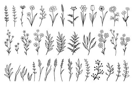 dibujado a mano flores y hierbas aisladas