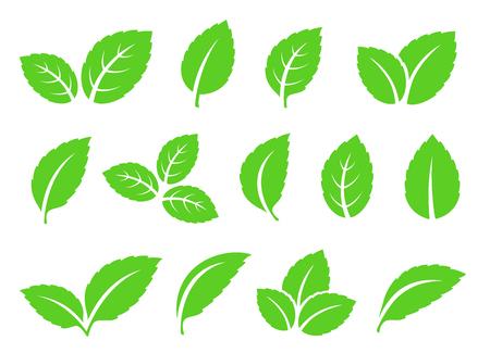 foglie di menta astratte disegnate a mano impostate icone