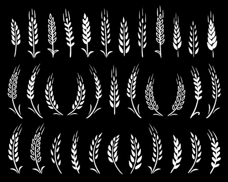 set of chalk hand drawn wheat ears icons
