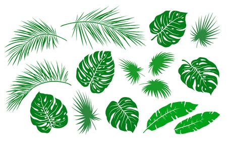 Hojas de palmera verde tropical y ramas de verano de ramas sobre fondo blanco.