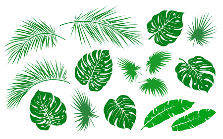 tropical green palm leaves and branches branches summer set on white background