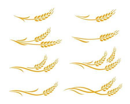 Dibujado a mano decorativos espigas de trigo, avena, espigas de grano de centeno con conjunto de iconos de hojas Ilustración de vector