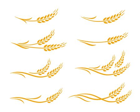 Hand drawn decorative wheat ears, oats, rye grain spikes with leaves icons set Illustration