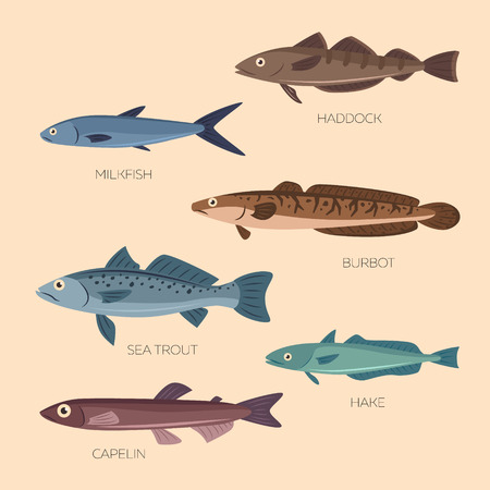 haddock: Set of six sea and ocean fish: sea trout, capelin, burbot, haddock, milkfish, hake in flat style. Cute cartoon flat design fishes in light background isolated.