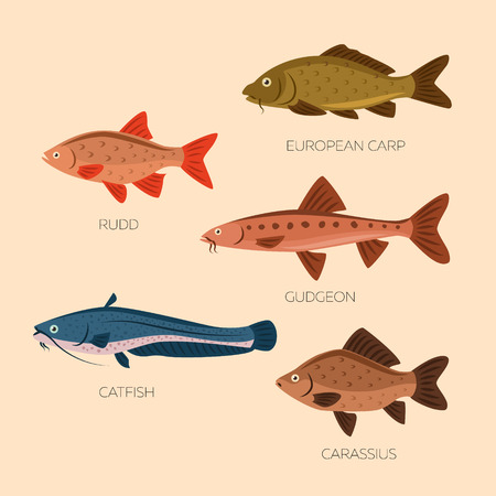 gudgeon: Set of five river fish: rudd, european carp, gudgeon, catfish, carassius in flat style. River fish icons collection isolated. Cute cartoon flat design fishes on light background. Illustration