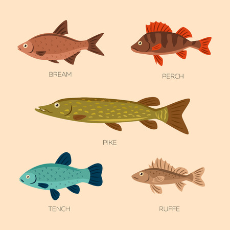 Set of five river fish: bream, perch, pike, ruffe, tench in flat style. River fish icons collection isolated. Cute cartoon flat design fishes on light background. Ilustração