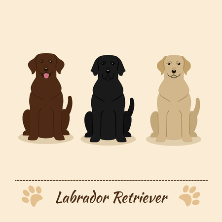 labrador: Set of different colors of Labrador Retriever: black, fawn, brown. Vector Illustration of three sitting dogs. Cartoon characters.