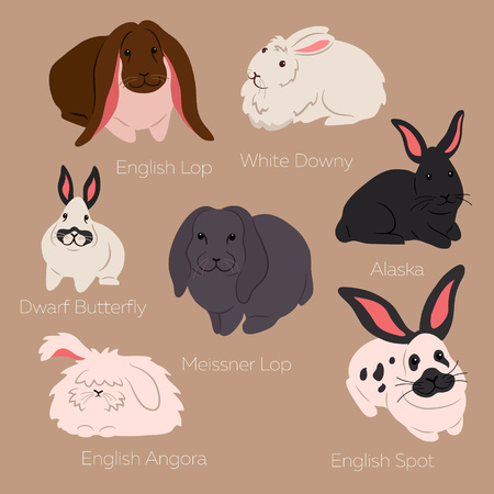 lop lop rabbit white: Vector illustration of rabbits: English Loop, White Downy, Dwarf Butterfly, Alaska, Meissner Lop, English Spot, Angora isolated on the white background. Different rabbit breeds. Illustration