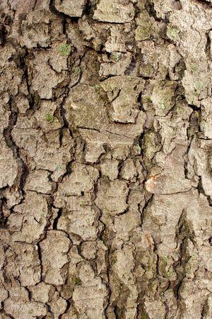 Background bark trunk  tree branch photo