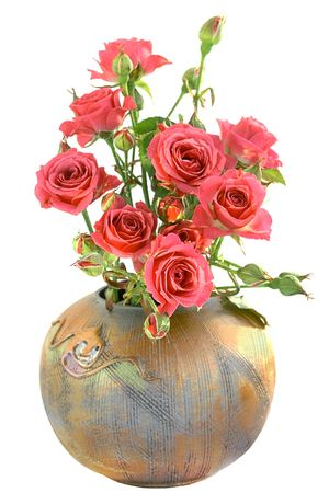 Roses in vase, isolated on white background photo