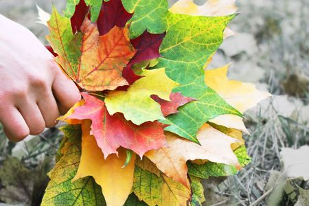 Bouquet of bright autumnal leaves in the hand photo