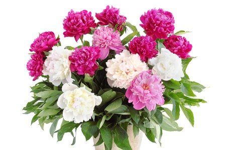 Large bouquet of pions on the white