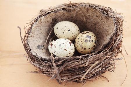 spotty: three quail spotty eggs in the nest Stock Photo