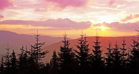 locality: Pink dawn in the fir mountain locality