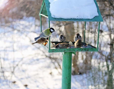 Winter feeding trough for the wild birds  photo