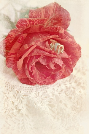 Ancient postcard, red rose with the ring photo