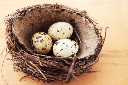 three quail spotted eggs in the nest photo