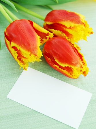 Beautiful orange tulips and a card copy-space photo
