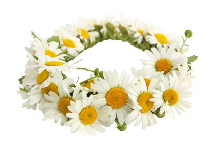 a wreath of white chamomiles on a white background